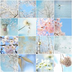 Awsome Pictures, Photo Tiles, Collages, Sweet Messages, Spring Blossom, Spring Has Sprung, Soft Colors, Mood Boards, Color Schemes