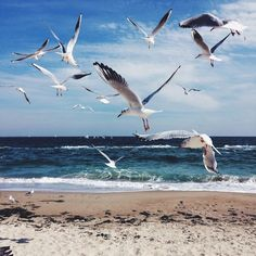 Shared by Yome. Find images and videos about summer, beach and sky on We Heart It - the app to get lost in what you love. Ocean Scenes, Beach Scenes, Beach Waves, Ocean Waves, Ukraine Beaches, Odessa Beach, Beautiful Birds, Beautiful World, Nicolas Vanier
