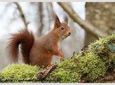 Squirrel Art, Zoology, Chipmunks, Childhood Memories, Sculptures, Photos, Cute Animals, Images, Squirrels