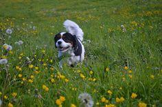 Gårdstunet Hundepensjonat: Av-og-på-vær i dag! Kennelfrua har fått god hjelp ...