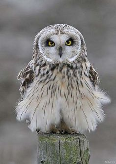 Loving baby owl