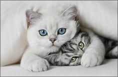 *umpff* #cat #kitten #kätzchen #sweetkitty