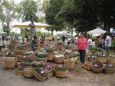 blog di Sara: Murabilia 2015 Lucca (I parte)