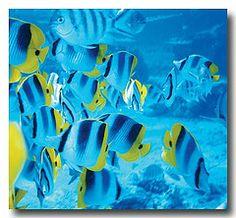 Flickr Search: ocean life | Flickr - Photo Sharing!