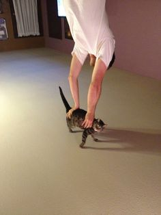 i thought he was doing a handstand on his cat