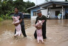 flooded farm | thailand 2013 | foto: epa
