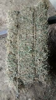 White House Farms: 3rd Cutting Alfalfa