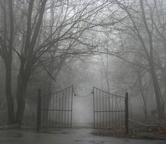 by Andrew Krotov White thick fog cradle the black tress. A gate in the front with a gap to be locked where no one can enter.