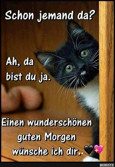 Good morning - funny, meaningful and sweet pictures to cheer up - süß - Humor Funny Good Morning Quotes, Morning Humor, Morning Sayings, Good Morning Picture, Morning Pictures, Funny Animal Quotes, Funny Animals, Cat Quotes, Animal Humor