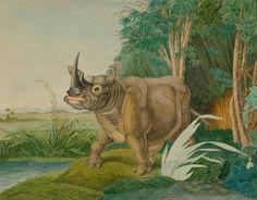 Aloys Zötl, Rhinoceros, Bestiarium, 1867. Austria. Koller Auktionen - Alte Graphik & Zeichnungen