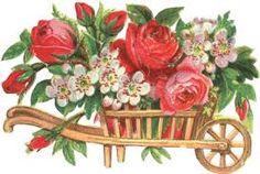 poezieplaatjes roses
