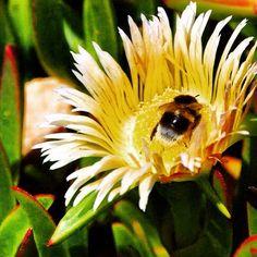 """@79jotaeme's photo: """"Buena es el agua y la sed; buena es la sombra y el sol; la miel de flor de romero, la miel del campo sin flor. #Machado"""""""