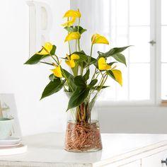 Water Plants Indoor, Indoor Flowers, Artificial Flowers, Hydroponic Plants, Terrarium Plants, Orchid Plants, Foliage Plants, Unusual Plants, Exotic Plants