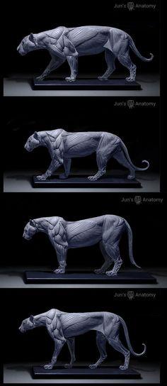 jaguar, leopard, cougar, cheetah: