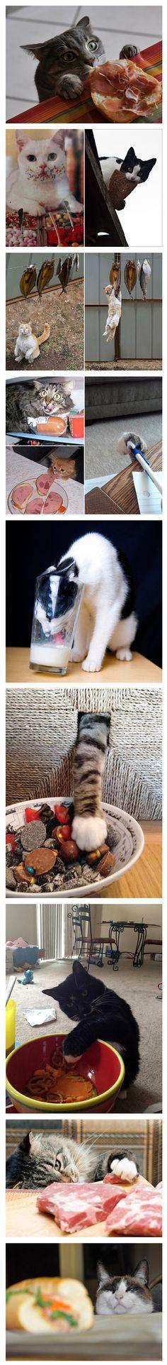 Gatos robando comida