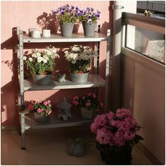 Patio ideas.  I'll get me a cute shelf and decorate it with plants.  Something sturdy but well used.