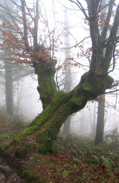 Niebla en Arrate, Eibar