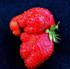 Elephant strawberry :o