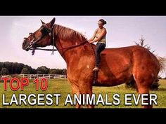 Top 10 Biggest Animals Ever of their Kind - YouTube