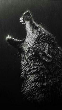 ... Wolf ...