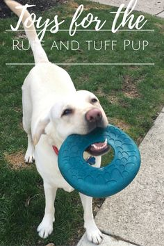 Check out Cooper and Murphy's top picks for ruff-est and tuff-est dog toys and then... treat yo pup! We always look to build our toy collection with labby tough, durable toys that will be worth our buck and hold up to lots of play, slobber, and tug of war.
