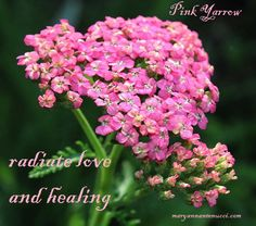Through compassion, we radiate love and healing; we do not absorb pain and strife. Pink yarrow essence dries up the emotional sponginess and remind us that love and healing come from a place of strength .