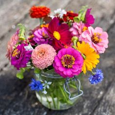 Which cut flowers will you be growing this year? Pictured are zinnias cosmos cornflowers and calendulas. : @pauldebois