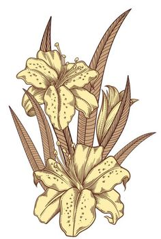 Blooming lily flowers , detailed hand drawn vector illustration. Romantic decorative flower drawing .Lilies in line art sketchy style.All authentic unique flourish objects isolated on white background Botanical Flowers, Flowers Nature, Botanical Art, Lilies Flowers, Flowers Garden, Flower Vector Art, Flower Art Images, Modern Flower Arrangements, Hybrid Tea Roses