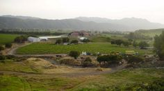 St Tomas Winery, Mexico w/my wine buddy -- all expenses paid by my business from home 2010