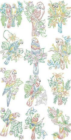 parrots_in_the_tropics_01_900