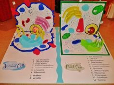 cell pop-up book | Animal and plant cell project idea. Foam is awesome to work with and ...