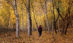 Into The Jungle by Syed Mehdi Bukhari on Pakistan Photos, Pakistan Zindabad, Poplar Tree, Gilgit Baltistan, Green Grass, Serenity, Landscape Photography, Beautiful Places, Scenery
