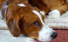 """Lou ist wohl das, was landläufig als """"Problemhund"""" aus dem Tierheim bezeichnet wird. Jetzt bekommt er seine 2. Chance. Lest mehr auf dem Hunde Blog."""
