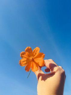 Orange Aesthetic, Sky Aesthetic, Flower Aesthetic, Aesthetic Vintage, Aesthetic Photo, Aesthetic Pictures, Hand Photography, Tumblr Photography, Photography Aesthetic