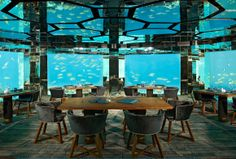 Here's something different....Stay over-water, dine underwater at the Sea Restaurant, Anantara Kihavah, Maldives
