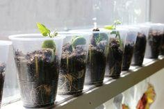Bu Sebzelere Bir Kere Para Verin, Sonra Evde Yetiştirin!