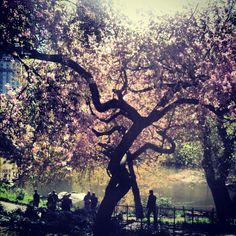 Spring time in central park <3