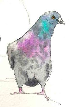 Pigeon pen & watercolour wash I'm prone to obsession and my current craze is birds. Until now I'd had no luck feeding birds in our gard. Pen And Watercolor, Watercolor Artists, Watercolor Animals, Pigeon, Bird Outline, Sparrow Art, Bird Sketch, Nature Sketch, Organic Art