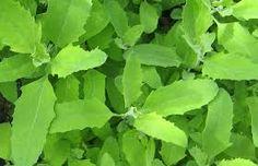 дикие травы сибири - Поиск в Google