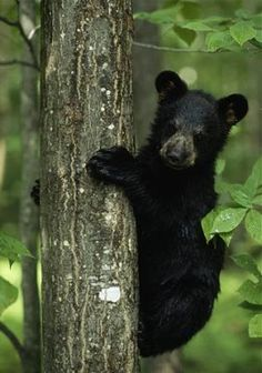 We've all been there... 31 Pictures of Bears: Polar, Panda, Black, Brown, Grizzly. Bears. Bears. Bears.