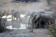Namibia-Etosha-National-Park-0082