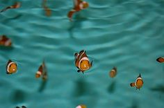 An idea for the film finding Nemo.