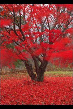#red #fall