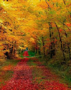 Autumn. .Forest. .