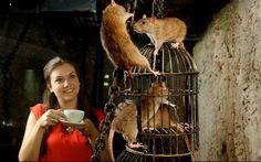 英國的知名景點「倫敦地窖」(London Dungeon),的老鼠咖啡廳開張。(圖擷取自每日郵報)