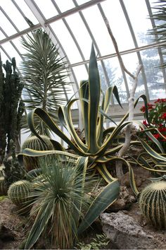 Desert room.     Phipps Conservatory and Botanical Gardens is a complex of buildings and grounds set in Schenley Park, Pittsburgh, Pennsylvania