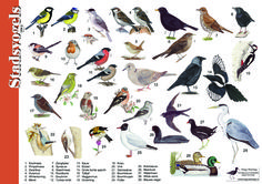 Herkenningskaart / zoekkaart Stadsvogels