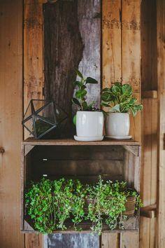 Plants & pallets