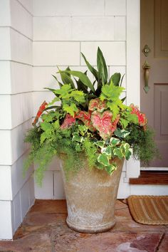Shady Ladies: Containers for Covered Porches