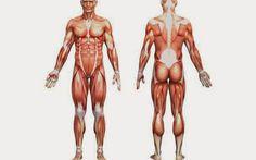 Μέρες παράξενες...: 6 ιστοί του σώματος που μπορούν να αναγεννηθούν μέ...